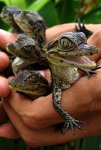 Ferme aux crocodilesde Pierrelatte