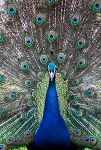 Parc zoologiquede Mulhouse