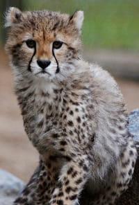 Zoo de la Palmyreprès de Royan