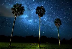 Palmiers de la galaxie